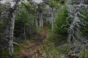 Калининградский зеленый крест: Нарушение лесного законодательства в Калининградской области